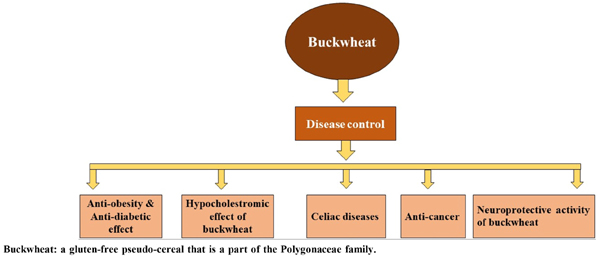 Health Benefits of Buckwheat (Fagopyrum Esculentum), Potential Remedy for Diseases, Rare to Cancer: A Mini Review