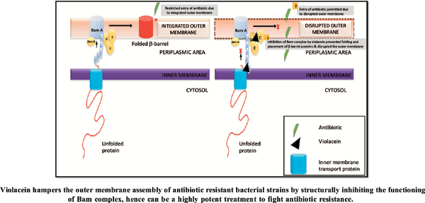 Exploring Nature's Treasure to Inhibit β-Barrel Assembly Machinery of Antibiotic Resistant Bacteria: An <i>In silico</i> Approach