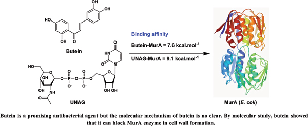 Mode Action Prediction of Butein as Antibacterial Oral Pathogen against <i>Enterococcus faecalis</i> ATCC 29212 and an Inhibitor of MurA Enzyme: In Vitro and In Silico Study