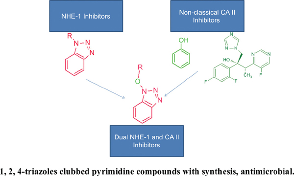 Synthesis and Evaluation of 1-hydroxybenzotriazole Derivatives: Dual Inhibitors of Carbonic Anhydrase II and Sodium Hydrogen Exchanger I