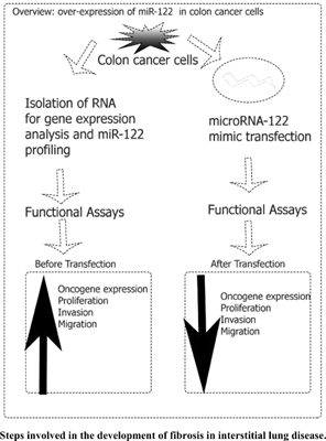 Over-Expression of MicroRNA-122 Inhibits Proliferation and Induces Apoptosis in Colon Cancer Cells