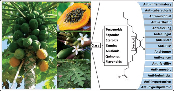 Ethnomedicinal Uses, Phytochemistry and Pharmacology of Carica