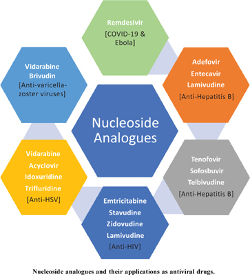 Nucleosides and Nucleoside Analogues as Emerging Antiviral Drugs