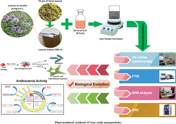 Plant-Mediated Synthesis of Iron Oxide Nanoparticles and Evaluation of the Antimicrobial Activity: A Review