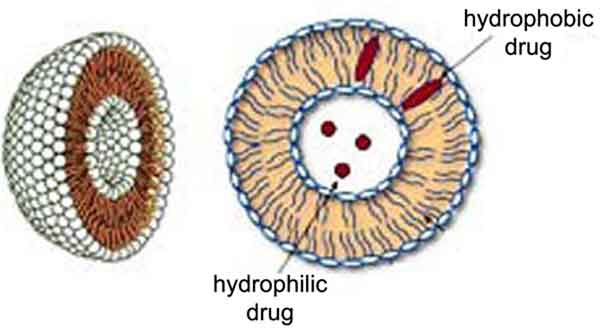 Recent Progress in Liposome Production, Relevance to Drug Delivery ...