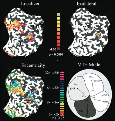 Visual Motion Processing Areas in the Human Brain Based on a Wide-Field Retinotopic Mapping Technique