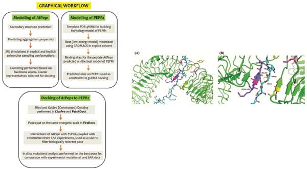 Mechanistic Basis Of Peptide-Protein Interaction In AtPep1-PEPR1 Complex In Arabidopsis thaliana ...