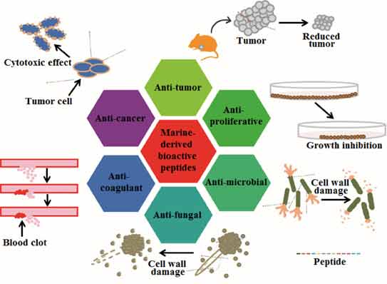 Marine-Derived Bioactive Peptides for Biomedical Sectors ...
