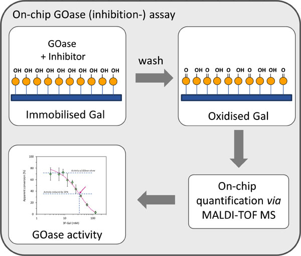 Development of a solid phase array assay for the screening of galactose oxidase activity and for fast identification of inhibitors